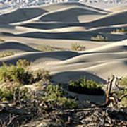 Mesquite Sand Dunes Art Print