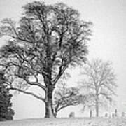 Mid Winter- Guardian Tree Art Print