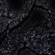 Midnight Tree 1 Art Print