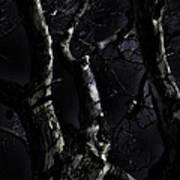 Midnight Tree 3 Art Print