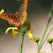 Migrating Butterfly Ser1 Art Print