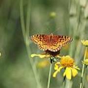Migrating Butterfly Ser2 Art Print