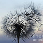 Wind Blown 1 Art Print