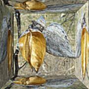 Milkweed Pods - Mirror Box Art Print