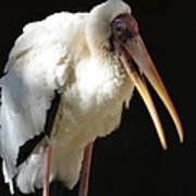 Milky Stork Art Print