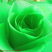 Mint Rose Art Print