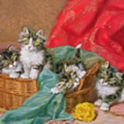 Mischievous Kittens Art Print