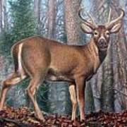 Missouri Whitetail Deer Art Print