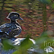 Missy Wood Duck Art Print