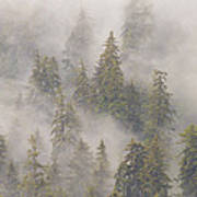 Mist In Tongass National Forest Art Print