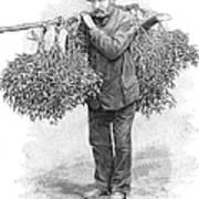 Mistletoe Gatherer, 1894 Art Print
