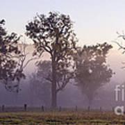 Misty Dawn Art Print