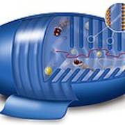 Mitochondrion, Artwork Print by Art For Science
