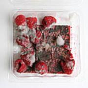 Moldy Raspberries Art Print