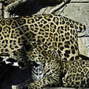 Mom And Baby Cheetah Art Print