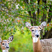 Mom And Baby Deer Art Print