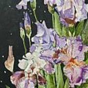 Mom's Night Iris Art Print