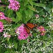 Monarch In The Garden   Art Print