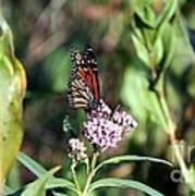 Monarch On The Wild Flowers Art Print
