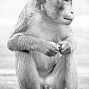 Monkey Dick Art Print