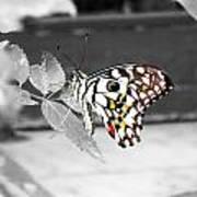 Monochromatic Butterfly Art Print