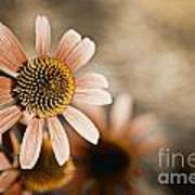 Monotone Flower Art Print