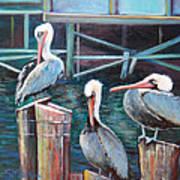 Monterey Pelicans Art Print