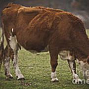 Moo Moo Cow Art Print