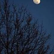 Moon And Trees Art Print