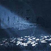 Moon Light Daisies Art Print