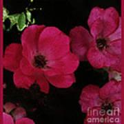 Moonlight Roses Art Print
