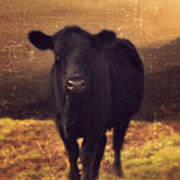 Moooo Cow  Art Print