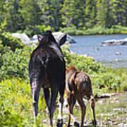 Moose Ends Baxter State Park Maine Art Print