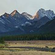 Moose Grazing At Sunset With Mountains Print by Philippe Widling