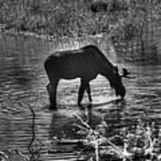 Moose Silhouette Art Print