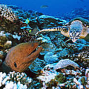Moray Eel On A Reef Art Print
