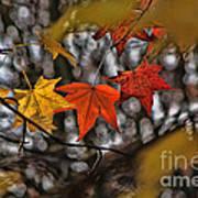 More Autumn Leaves Art Print