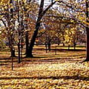 More Fall Trees Art Print