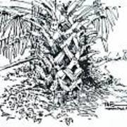 Morikami Gardens' Tree Boca Raton Florida  Art Print