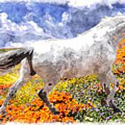Morisco In Spring Flowers Art Print