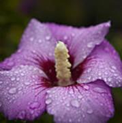 Morning Dew On Garden Flower Art Print