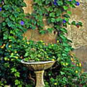 Morning Glory Garden In Provence Art Print