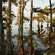 Morning In The Swamps Art Print