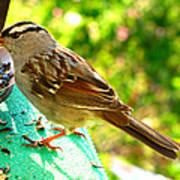 Morning Sparrow II Art Print