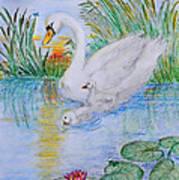 Morning Swim II  Edited Original Art Art Print