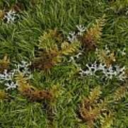 Moss And Lichen Art Print