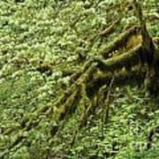 Moss Covered Tree Art Print