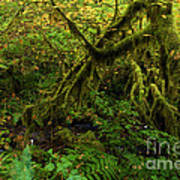 Moss In The Rainforest Art Print