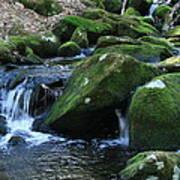 Moss Overflow Art Print