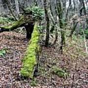 Mossey Log Art Print